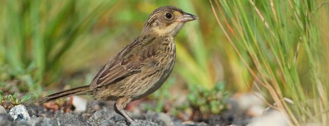 Featured Photo: September/October 2014 Birding