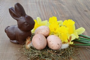 Easter Background, Chocolate Bunny, Spotted Eggs, Daffodils