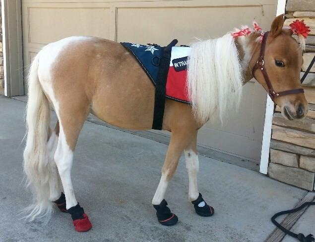 Miniature Horse Service Animal Shoes