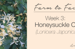 how to make honeysuckle oil | farm to face