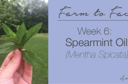 how to make spearmint oil | farm to face