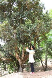 wei at tree