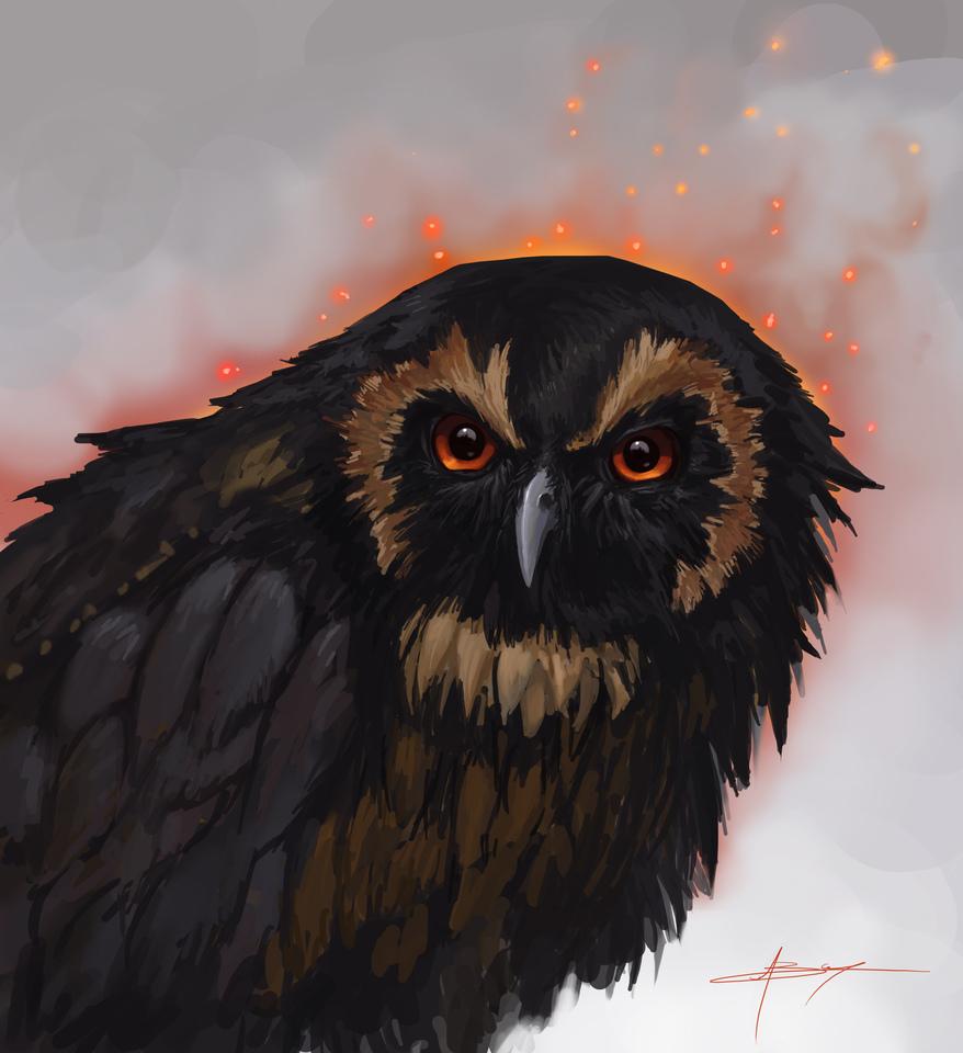 Grumpy Owl by Boris Campistron