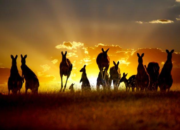 Car Chase Wallpaper Have A Hoppin Holiday On Kangaroo Island Destinations