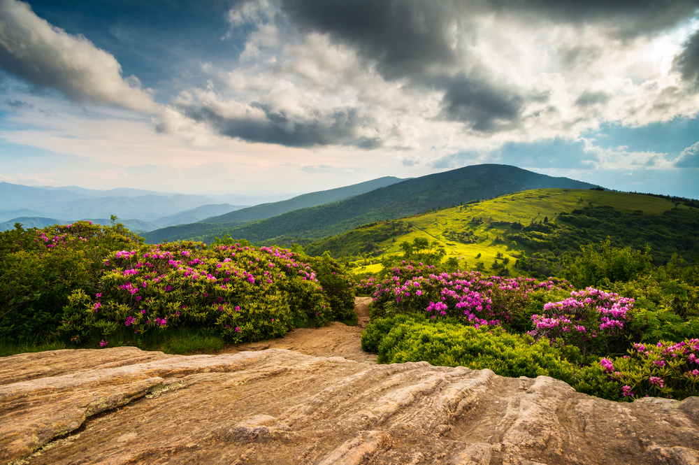 Fall Hills Wallpaper 5 Gorgeous North Carolina Hikes For Flower Lovers Point