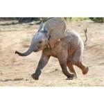 live-action_Dumbo