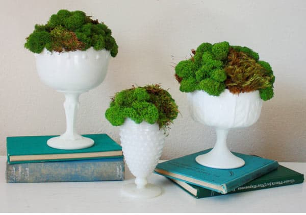 moss in ceramic vessel