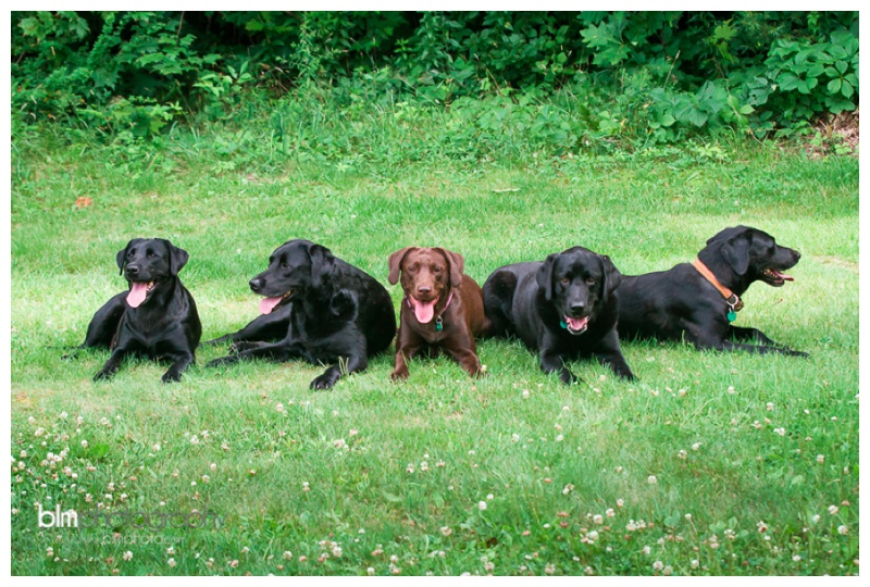 Webber-Puppies_072115-4177.jpg