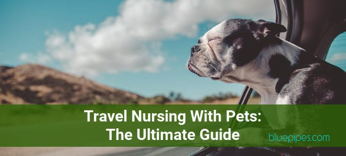 Travel Nursing With Pets - The Ultimate Guide » BluePipes Blog