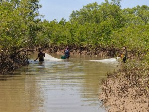 Not all villages have the same fishing gear restrictions in their local rules, here people can still use very small mesh nets in the mangrove channel