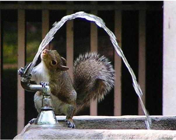 squirrel_fountain_t620