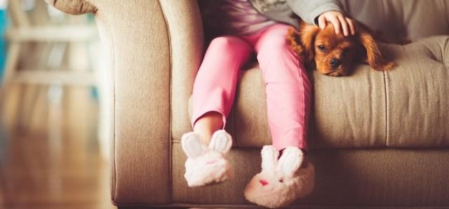 Mascotas en Casa