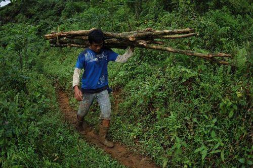 illegal_logging
