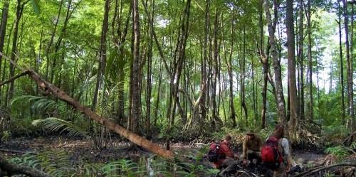Tim USFS bersama staf taman nasional mengukur cadangan karbon dari rerubuhan pohon di hutan Kalimantan.