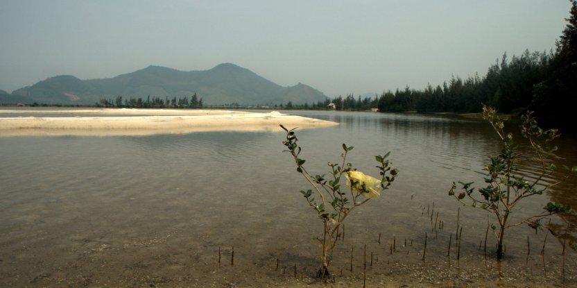 Degraded mangroves in Vietnam. Photo by Leony Aurora\CIFOR