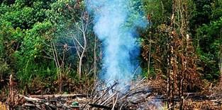 Kebakaran hutan di Indonesia tahun 2007 (Foto/CIFOR)