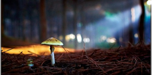 mushroom-forest