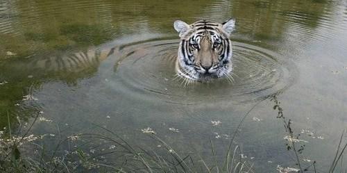 Baghmara Wildlife Resort.