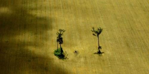 Deforestasi lahan karena pertanian di negara bagian Mato Grosso, Brasil.