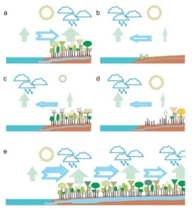 """The """"biotic pump"""" model: (a) Under full sunshine, forests maintain higher evaporation than oceans and thus draw in moist ocean air. (b) In deserts, evaporation is low and air is drawn toward the oceans. (c) In seasonal climates, solar energy may be insufficient to maintain forest evaporation at rates higher than those over the oceans during a winter dry season, and the oceans draw air from the land. However, in summer, high forest evaporation rates are reestablished (as in panel a). (d) With forest loss, the net evaporation over the land declines and may be insufficient to counterbalance that from the ocean: air will flow seaward and the land becomes arid and unable to sustain forests. (e) In wet continents, continuous forest cover maintaining high evaporation allows large amounts of moist air to be drawn in from the coast. Source: Sheil and Murdiyarso (2009)."""