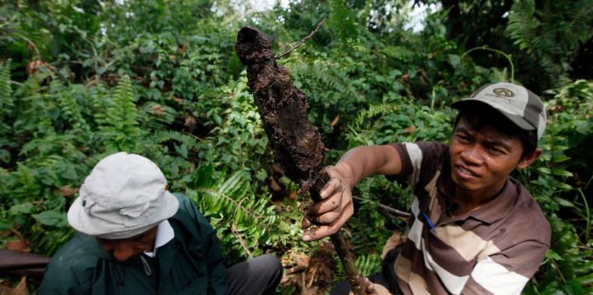 Seberapa dalamkah rawa gambut ? Indrianto, kanan, dan Suratman dari Yayasan Ekosistem Lestari (YEL) mengukur kedalaman gambut di Tripa hutan rawa gambut di provinsi Aceh. Dita Alangkara/CIFOR