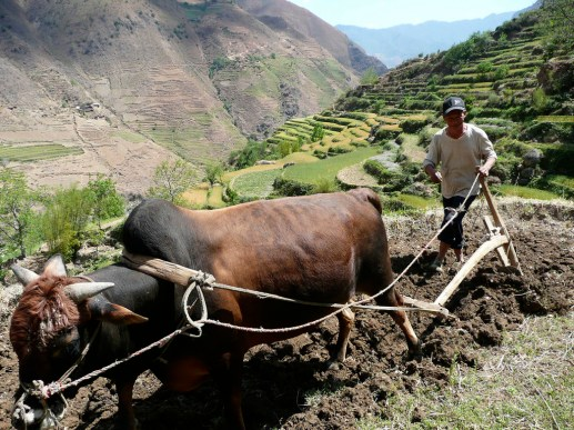 Through payments, China's central government has taken steps to reduce the environmental impacts of farming on steep slopes. Colin Carpenter.
