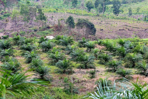 Land cleared for oil palm plantation, East Kalimantan, Indonesia. CIFOR/Mokhamad Edliadi