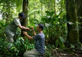 A CIFOR researcher and nationa par officer set up a camera trap in Gunung Halimun-Salak naitonal park.