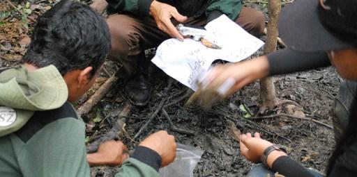 Penemuan taring harimau.