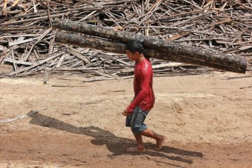 Los pequeños agricultores han encontrado nichos para la venta de madera en los mercados locales, que les ayudan a complementar sus ingresos, explicó Peter Cronkleton, científico senior del Centro para la Investigación Forestal Internacional (CIFOR).