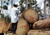 La evaluación científica de la certificación forestal es importante para informar a todos los que brindan apoyo si es que están obteniendo valor por su dinero. Fotografía de Agung Prasetyo/CIFOR