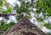 """REDD+ puede llevar a mejoras en algunas áreas de proyecto, pero no ha implicado un cambio fundamental, y a estas alturas parece poco probable que lo haga"""", dijo Anne Larson, Investigadora Principal del Centro para la Investigación Forestal Internacional. CIFOR/Marco Simola"""