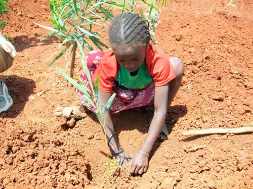 If Ethiopia is to meet next year's wood demand, it will have to plant trees on 6 million hectares of land. Trees for the Future/Flickr