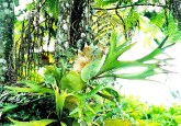El programa Bolsa Floresta refuerza la conservación mediante una combinación de desarrollo comunitario, pago por servicios ambientales, prestación de servicios públicos y apoyo a organizaciones comunitarias, dijo Sven Wunder, economista senior del Centro para la Investigación Forestal Internacional. Fotografía: Flávio Jota de Paula