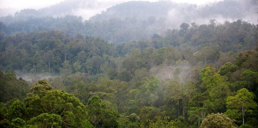 Morning mist in Gunung Halimun-Salak National Park, Java, Indonesia.  Mokhamad Edliadi/CIFOR photo