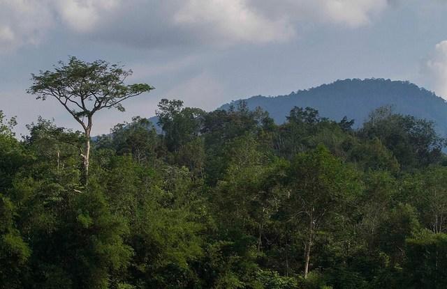 Desafiando la sabiduría convencional, un equipo de investigación de la Red de Pobreza y Medio Ambiente (PEN) encontró que apenas uno de cada 10 hogares recurre al aprovechamiento de bosques naturales u otros recursos silvestres como primera respuesta ante una emergencia. Fotografía: CIFOR/Tri Saputro