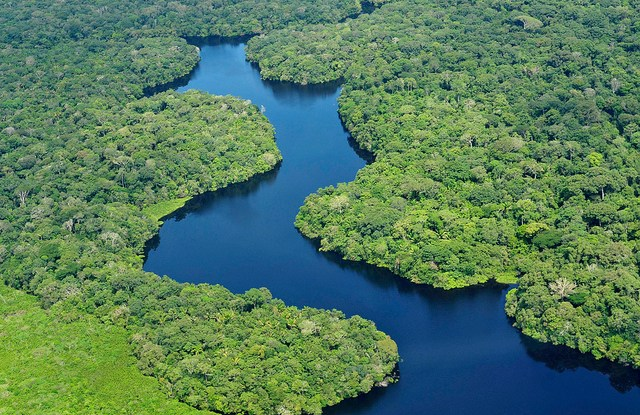 Hutan Amazon. Neil Palmer/CIFOR