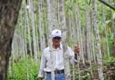 La demanda por bolaina se disparó en 2007, después de que un fuerte terremoto arrasara la ciudad de Pisco, en la costa sur de Perú, y los fabricantes adquirieran grandes cantidades de esa madera para la construcción de casas prefabricadas. CIFOR/Ernesto Benavides