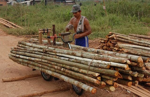 Panenan kayu siap untuk diolah di danau Sentarum, Kalimantan Barat. Para konservasionis mengajukan usul pengabungan kawasan lindung dengan konsesi kayu guna mempertahankan lanskap hutan ketimbang menjaga kawasan tersebut saja. Photo @CIFOR