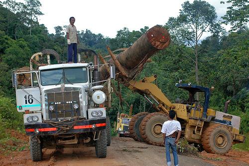 Sistem internasional untuk mengontrol perdagangan kayu harus bekerja lebih erat jika ingin membendung gelombang kayu ilegal, demikian menurut sebuah laporan. Photo @CIFOR