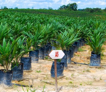 Palm oil :timber blog