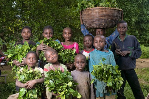 Portrait of children, from the village of minwoho, with their Gnetum (okok) harvest, Lekié, Center Region, Cameroon.   Photo by Ollivier Girard for Center for International Forestry Research (CIFOR).