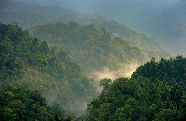 Bosques del Parque Nacional  Gunung Gede Pangrango, en Java occidental, Indonesia. Un comentario reciente acerca del papel de los bosques en el cambio climático no resiste el escrutinio científico, según un experto de CIFOR. Fotografía de Ricky Martin / CIFOR.