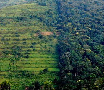Forest landscape in Uganda.   Photo by Douglas Sheil for Center for International Forestry Research (CIFOR).