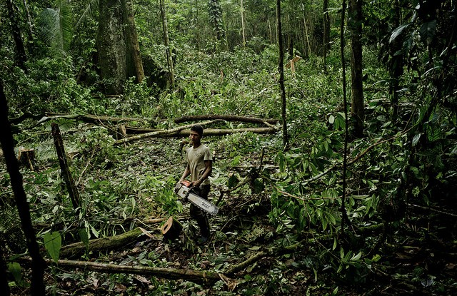 The idea of the undisturbed, pristine tropical rainforest captures people's imagination — and the priorities of researchers and donors.