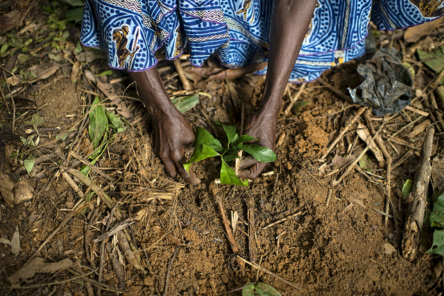 Cameroon research adds to growing consensus on sustainable climate change strategies