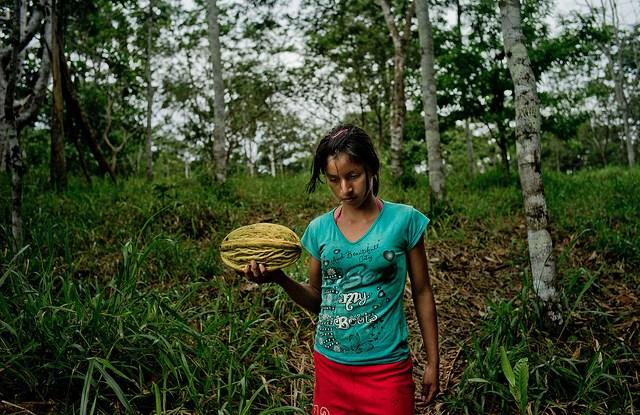 Una muchacha kichwa lleva un fruto a casa en los bosques amazónicos de la provincia de Napo, noreste del Ecuador. Un estudio indica que  la equidad social y aceptación local son cruciales para el éxito de los llamados programas de pago por servicios ambientales. Foto Tomas Munita/CIFOR