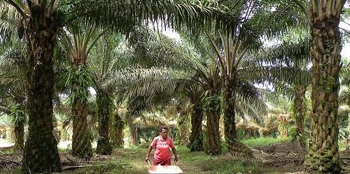 Papua - Indonesia, 2010.