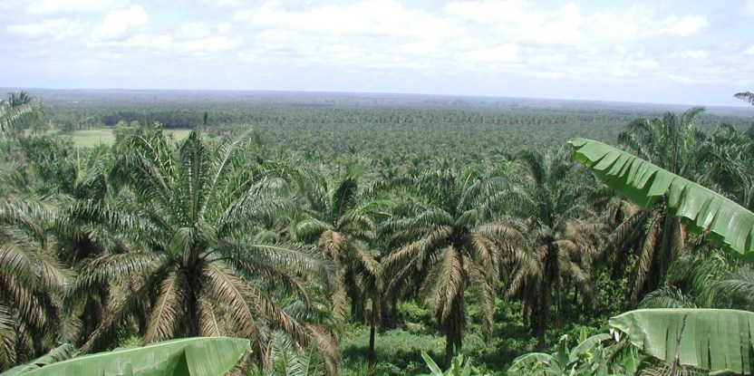How can the international community move away from business as usual, the current ways of deforestation and degradation?