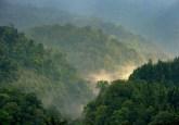 Hutan Gede Pangrango, Jawa Barat, Indonesia. Sebuah tulisan mengenai peran hutan dalam perubahan iklim tidak memenuhi standar pengamatan ilmiah, tulis pakar CIFOR. Ricky Martin/Foto CIFOR